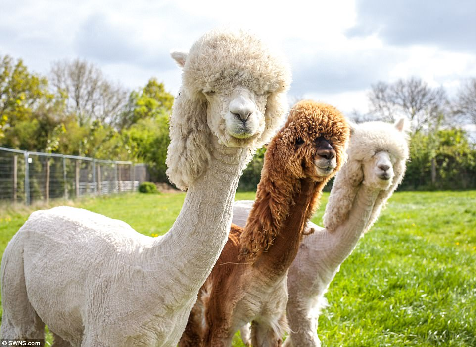 The former livestock farmer explained she wouldn't try shearing females – presumably because every woman knows the pain of a bad haircut.