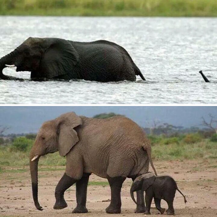 Elephants are the gentle giants we all know and love - but baby elephants are even better.