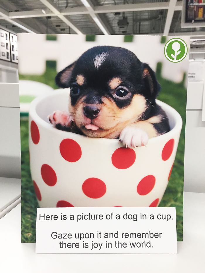 A picture of a puppy in a cup to remind you of the joy in the world