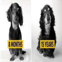 Photographer Takes Stunning Photos Of Dogs As They Age – This Is Fascinating!