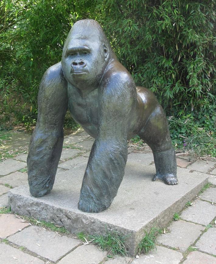 Gorillas Don't Know Their Own Power