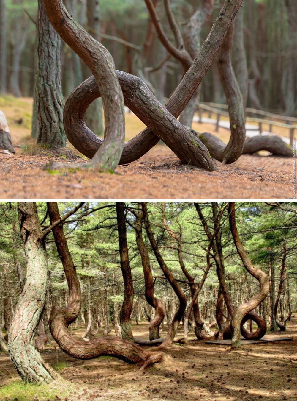 A dancing forest